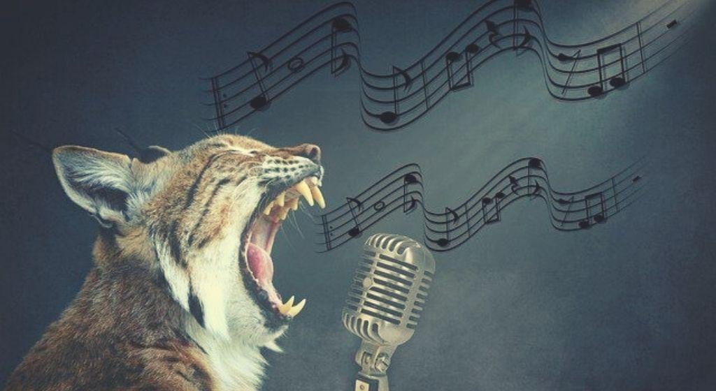 נמר שר על הקשר בין כתיבת תוכן למוסיקה