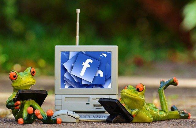 צפרדעים מנהלות עמודים אינפורמטיביים